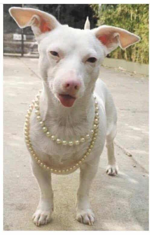 Mrs. Flans is one classy dog and she clearly has fine taste in jewelry too.